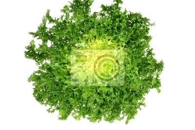 Wall mural Leaf vegetable - green endive ( Cichorium endivia )