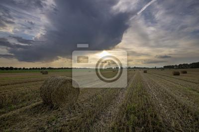 letnie pole