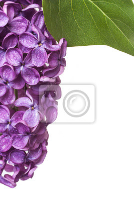Wall mural lilac