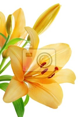 Wall mural lily