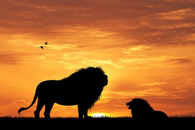 Wall mural lion silhouette at sunset