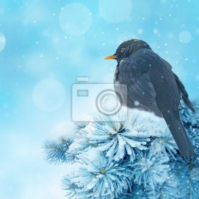 little bird in winter time
