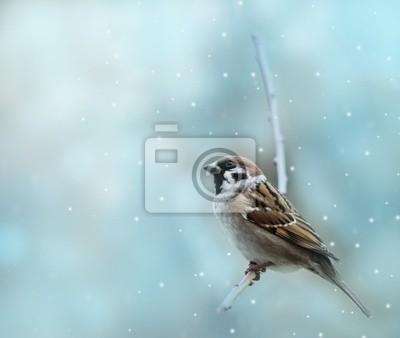 Wall mural little sparrow bird in winter time