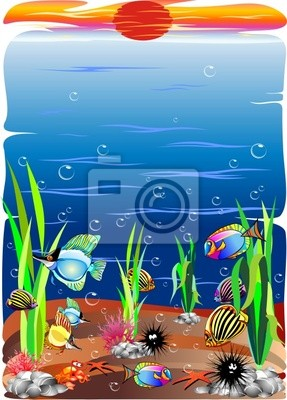 Livestock -Sea Ocean Animals- Animaux Mer 6