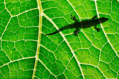 lizard silhouette on green leaf close up in the detail