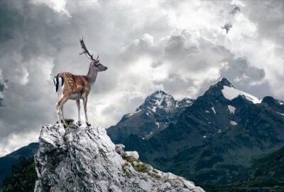 Wall mural Lonely Deer