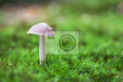 lonely white mushroom in moss vegetation