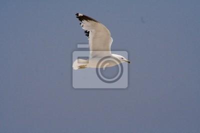 long island beach 2 - seagull