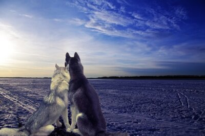 Wall mural lovers - two dogs meet the sunset