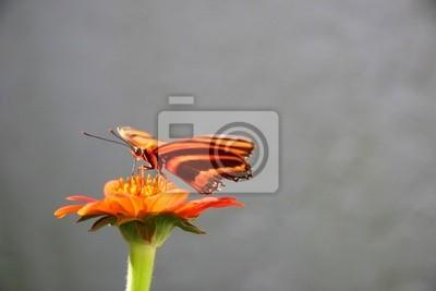 loving sweet nectar