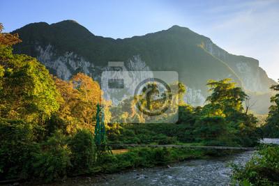 Lush forest scene at morning sunrise in Borneo Malaysia
