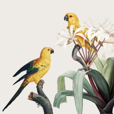 Wall mural Macaw tropical illustration