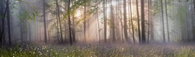 Wall mural Magic Carpathian forest at dawn