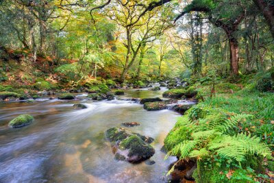 Wall mural Magical Forest River