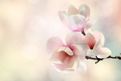 Wall mural magnolia