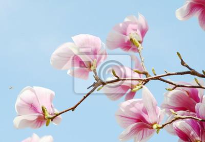 Wall mural magnolia tree blossom