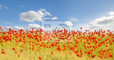 Maki polne-kwiaty,kolor selektywny