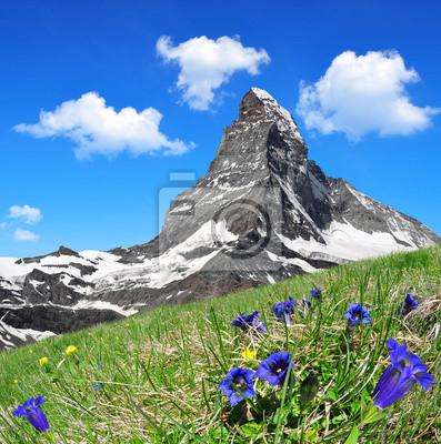 Matterhorn in the foreground blooming gentian, Pennine Alps, Switzerland