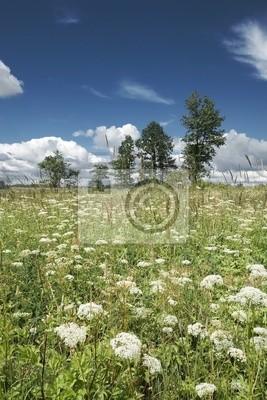 Wall mural meadow
