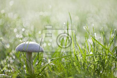 Wall mural meadow mushroom