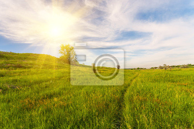 Wall mural Meadow with green grass and blue sky