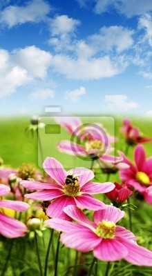 meadow with pink daisies