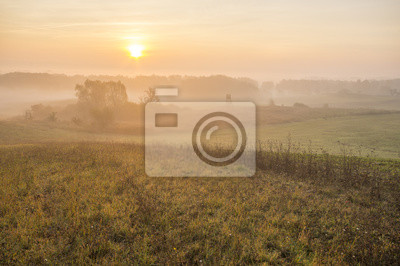 mgisty i słoneczny poranek na łące