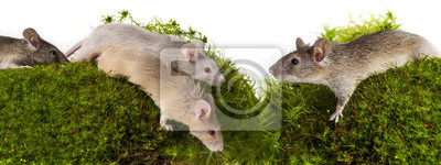 mice on a green moos
