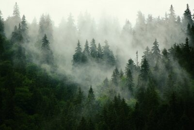 Wall mural Misty landscape with fir forest in hipster vintage retro style