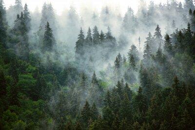 Wall mural Misty mountain landscape