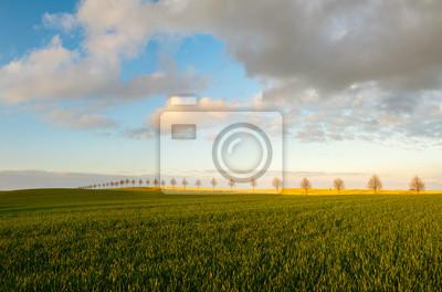 Młode zasiewy na wiosennym polu