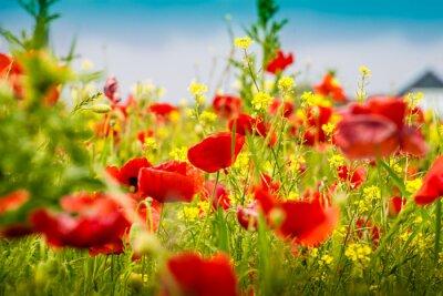 Wall mural Mohnblumen - The Poppy Field