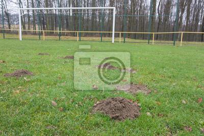 moles and football