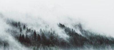 Wall mural Moody forest landscape with fog and mist