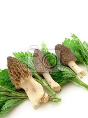 Morels and nettles isolated on white