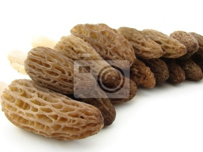 Morels isolated