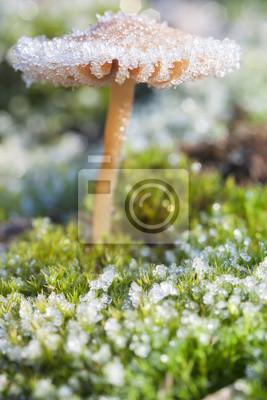 Morning frost on the mushroom