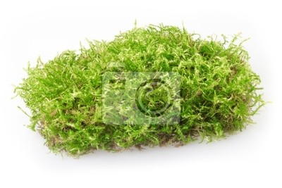 Wall mural moss