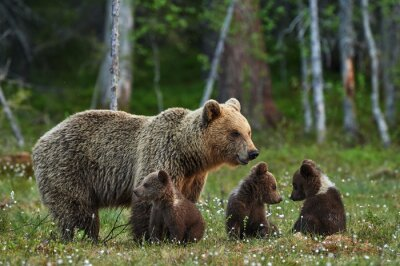Wall mural Mother bear and cubs