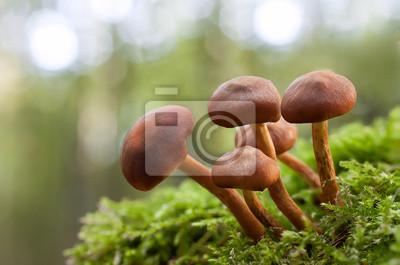 mushroom in green moss