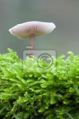 mushroom on mossy tree stump