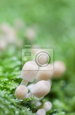 mushrooms in moss