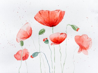 Wall mural Natural drawing of poppy flowers
