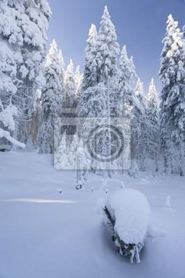 Naturpark im Winter