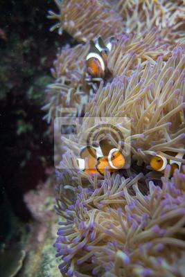 Nemo Towers
