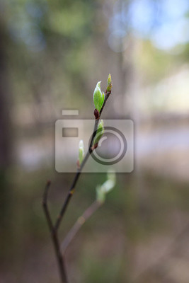 New leaf growing in tree at spring