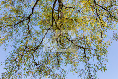 New leaves growing in tree perspective view