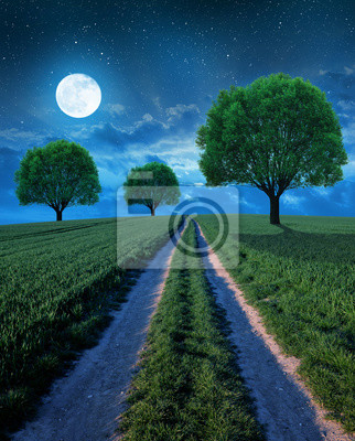 Night landscape with dirt road and trees.