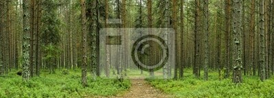 nothern forest