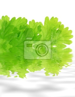 oak leaves and mirroring in water